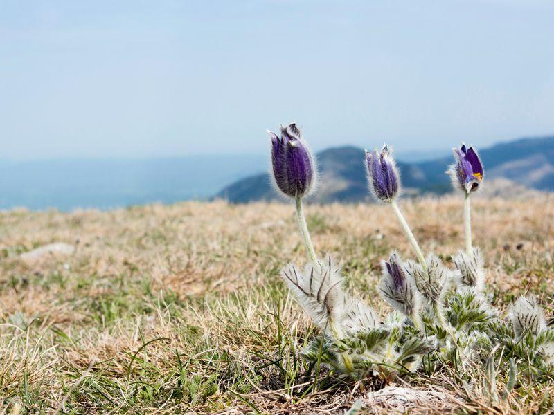 Трекинг к вершине Аю-Даг: туда, где цветут подснежники - экскурсия в Ялте