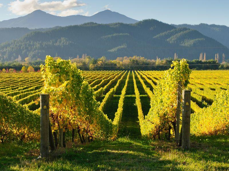 В Кахетию! Туда, где собирают солнце в виноград - экскурсия в Тбилиси