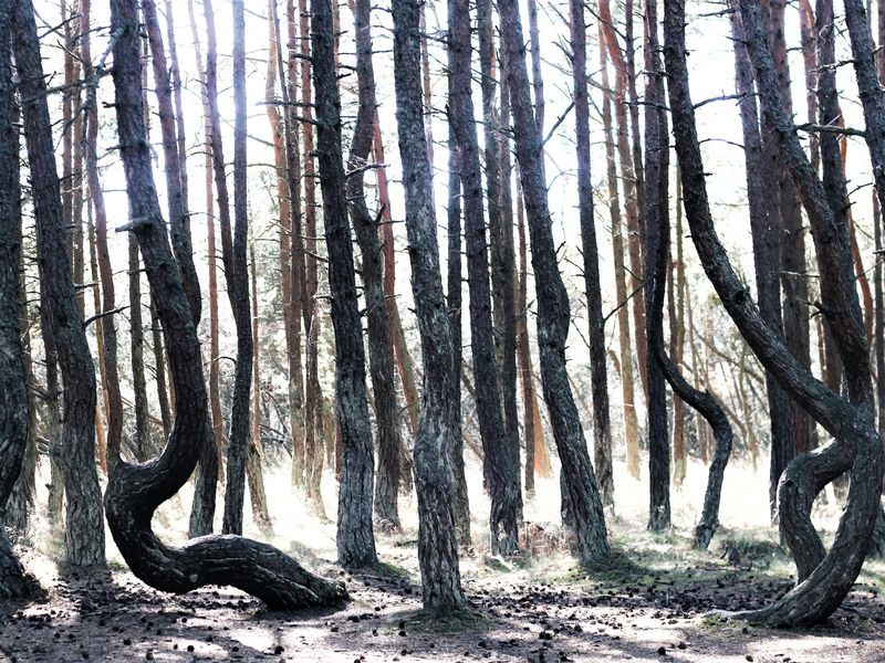 Природа и легенды Куршской косы - экскурсия в Светлогорске