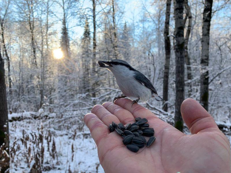 Зимняя сказка в природном парке «Оленьи ручьи» - экскурсия в Екатеринбурге
