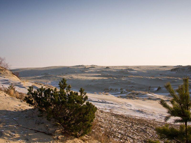 Куршская коса — магия дюн, ветра и сосен - экскурсия в Зеленоградске