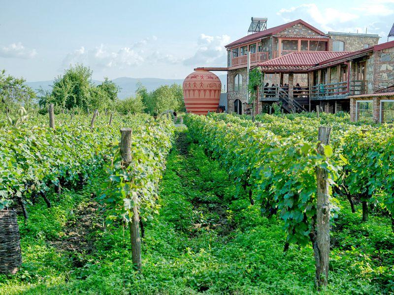 ВКахетию— край виноградной лозы! - экскурсия в Тбилиси