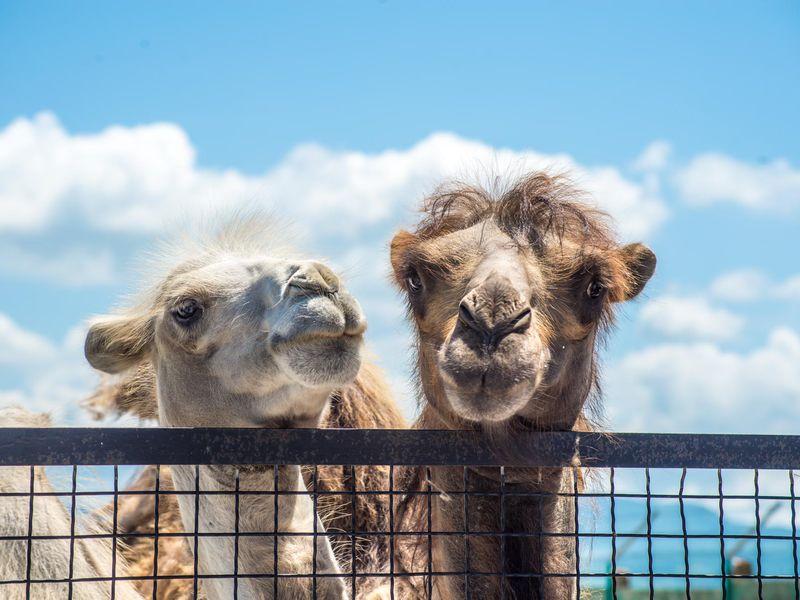 ИзАлушты— вСафари-парк «Тайган»! - экскурсия в Алуште