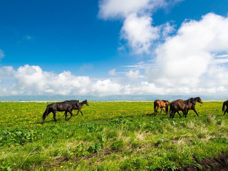 На внедорожнике — к грандиозному плато Бермамыт! - экскурсия в Кисловодске
