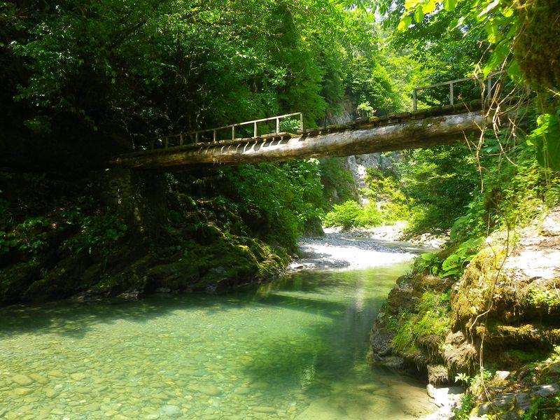 Природа Сочи - экскурсия в Сочи
