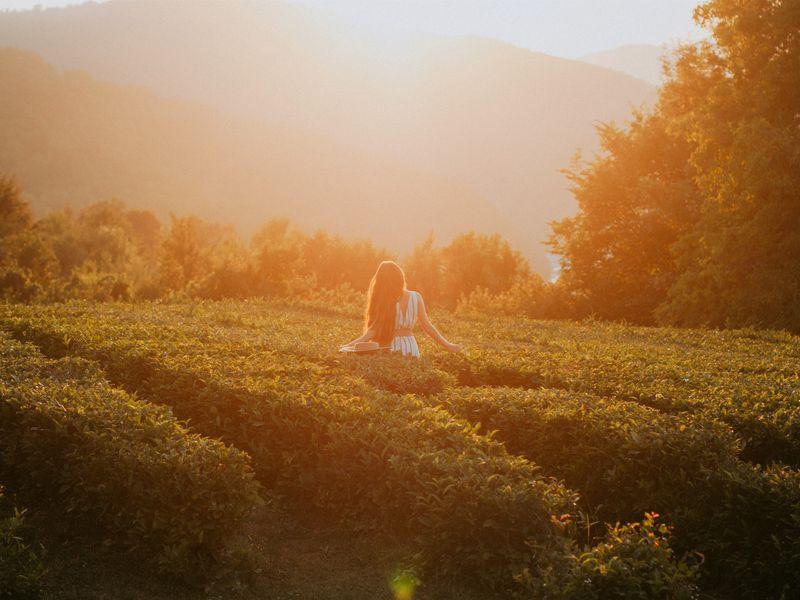 Чайные плантации и долина Шахе + фотосессия - экскурсия в Сочи