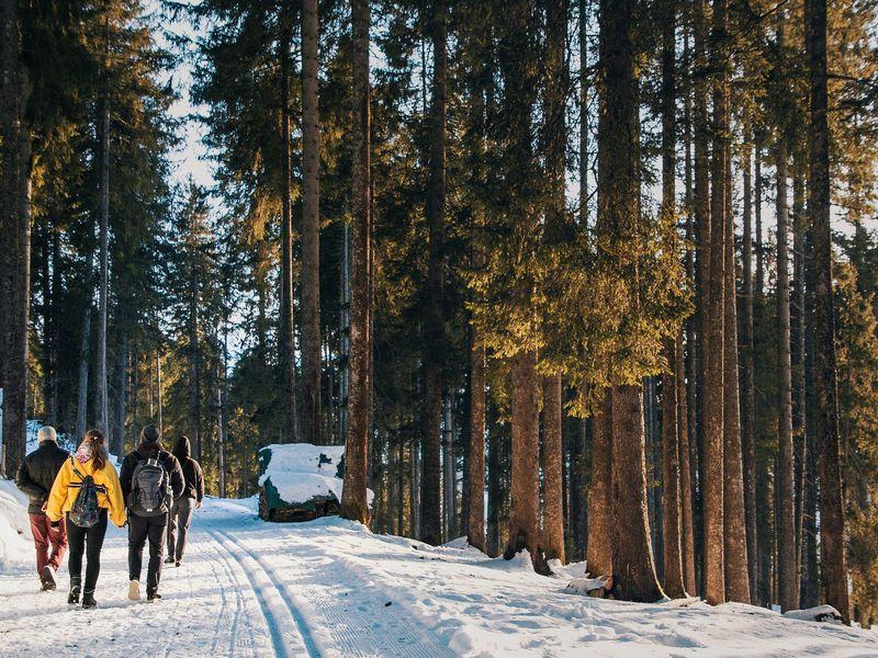 Красная Поляна: дольмены, горы и хаски - экскурсия в Адлере