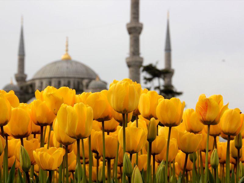 Тюльпанная история Стамбула - экскурсия в Стамбуле