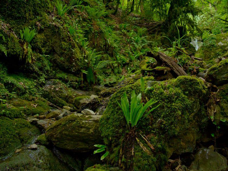 КАгурским водопадам— через колхидский лес - экскурсия в Сочи