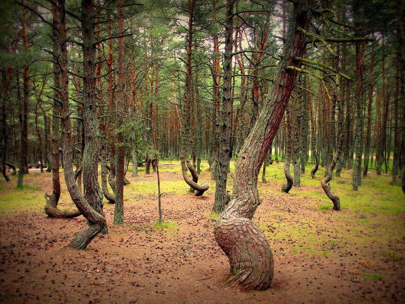 Национальный парк «Куршская коса», форт №3 и замок Нессельбек - экскурсия в Калининграде