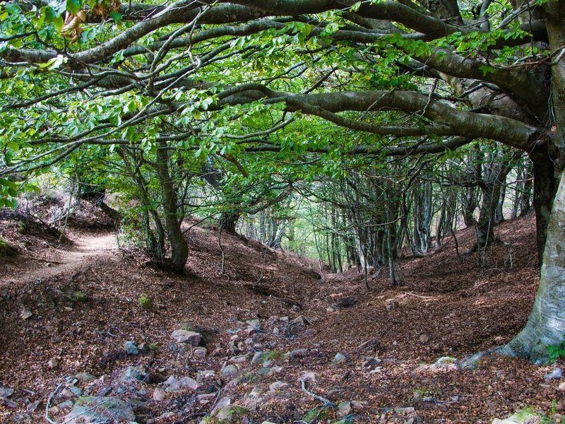 Древней дорогой Айгвафреда: трекинг - экскурсия в Барселоне