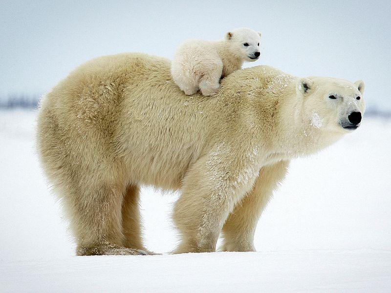 Семейное путешествие помузею Арктики иАнтарктики - экскурсия в Санкт-Петербурге
