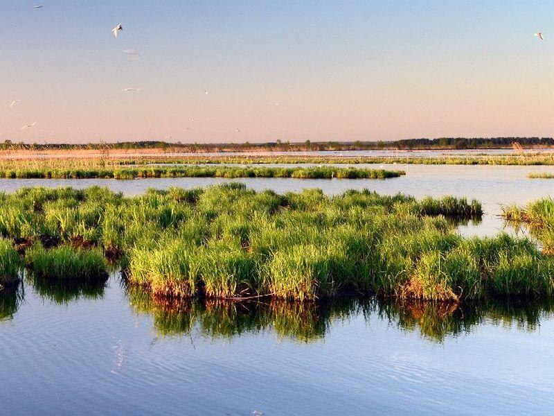 Сестрорецкое болото»: эко-треккинг ифотосессия - экскурсия в Санкт-Петербурге