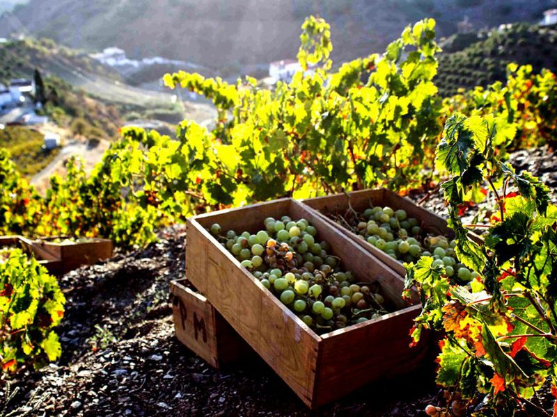 ИзБарселоны— вмир игристого вина ишоколада - экскурсия в Барселоне