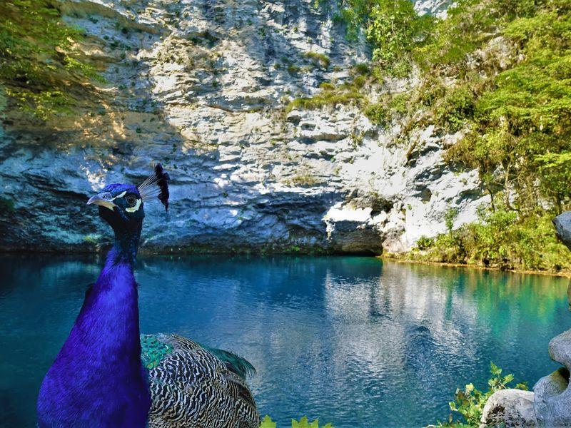 Альпийские луга и озеро Мзы - экскурсия в Гаграх