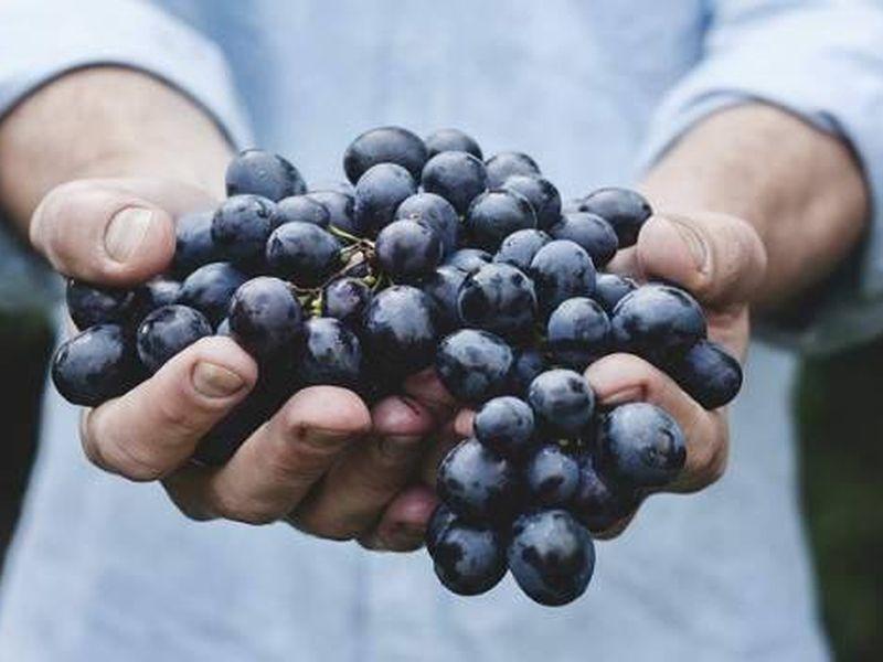 Искусство органического виноделия - экскурсия в Тбилиси