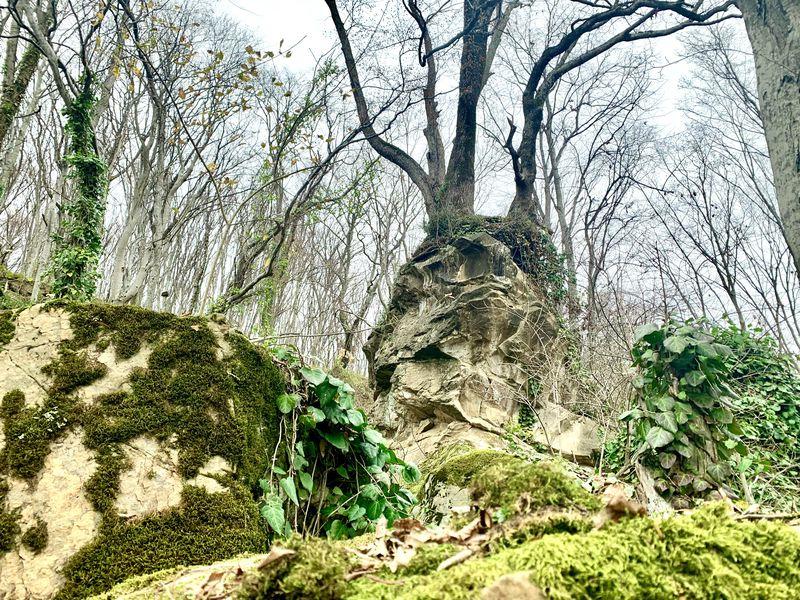 Поход к Сырному камню - экскурсия в Сочи