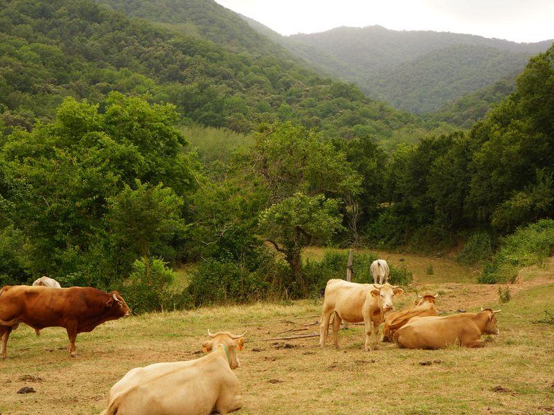 Поездка на лучшую сыроварню Пиренеев и в мясную столицу Каталонии - экскурсия в Барселоне