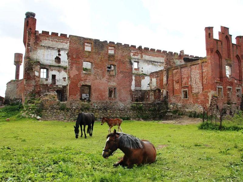 Шаакен Дорф: Средневековье совкусом - экскурсия в Калининграде