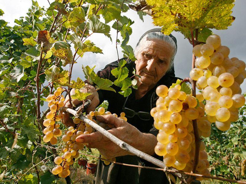 Дегустация грузинских вин, сыров и чурхчелы - экскурсия в Тбилиси