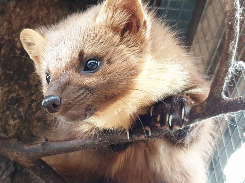 В мире животных Кавказа - экскурсия в Сочи
