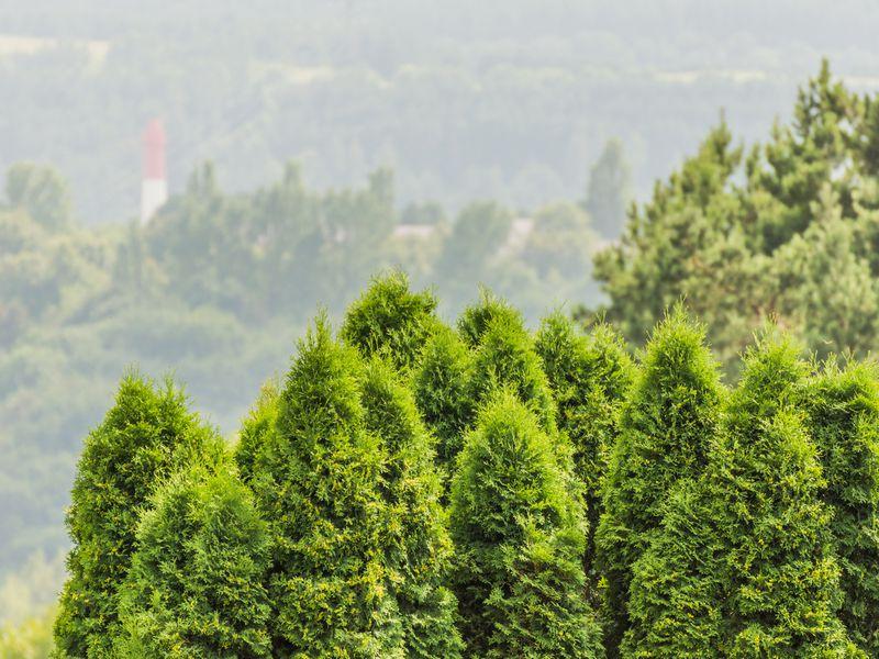 Кисловодский курортный парк— роскошь иочарование - экскурсия в Кисловодске