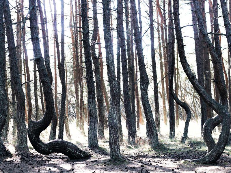 Природа и легенды Куршской косы - экскурсия в Зеленоградске