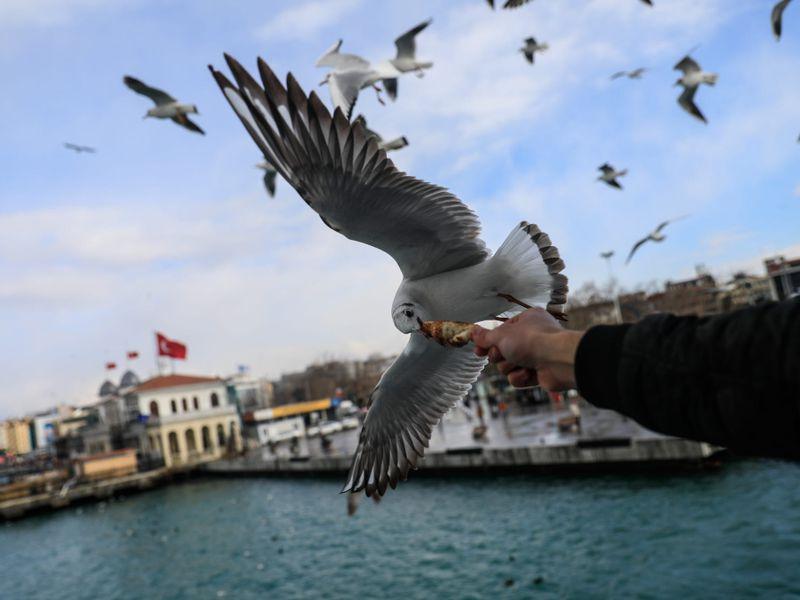 Первый день в Стамбуле - экскурсия в Стамбуле