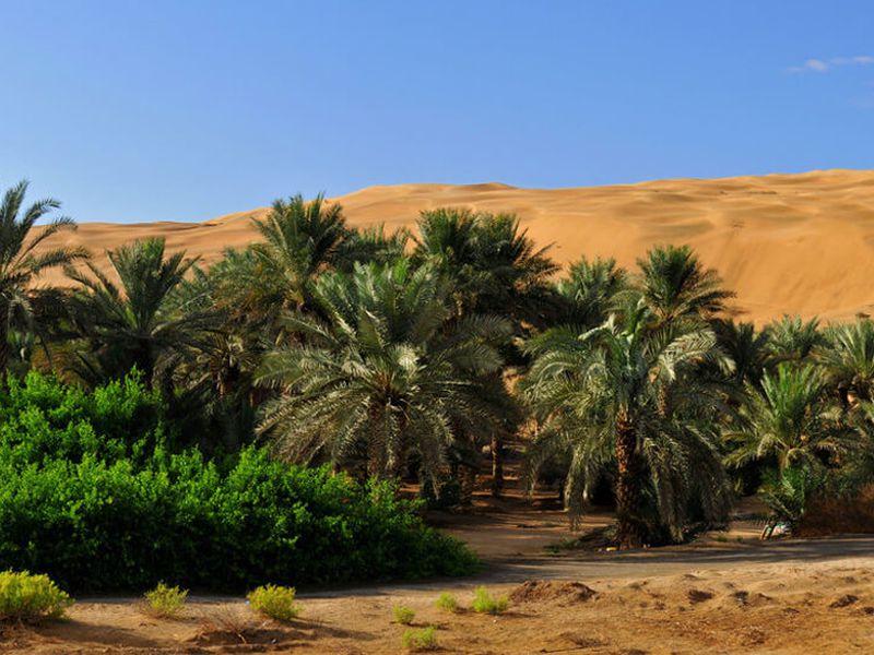 Краски Эмиратов: от красных песков до Индийского океана - экскурсия в Дубае