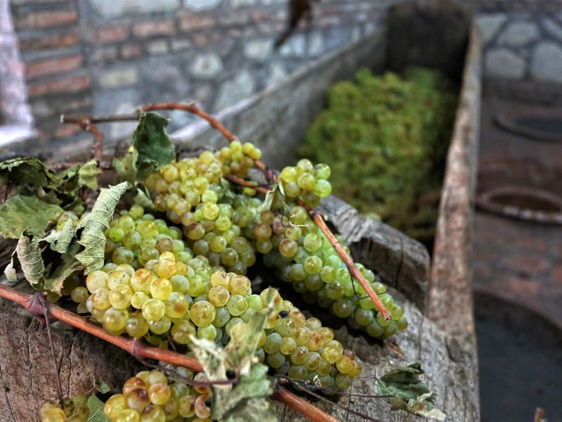 Кахетия — солнечная, историческая, винная - экскурсия в Тбилиси