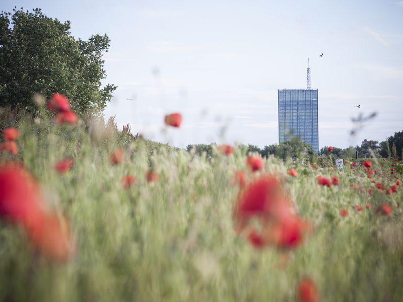 Белград— город награнице двух культур - экскурсия в Белграде