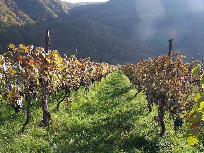 Дорогу в Кахетию осилит... ценящий вино! - экскурсия в Тбилиси