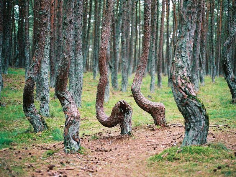 Куршская коса: земля древних куршей ивеликанши Неринги - экскурсия в Калининграде